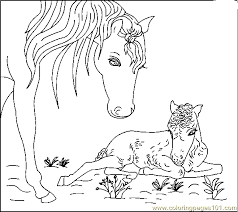 Free Print Horse Coloring Pages