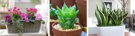 Plants In Bathroom Feng Shui by Plants In Feng Shui Energy Generators In Your House мир фэн шуй