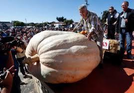 Alameda Pumpkin Patch 2015 by Half Moon Bay Pumpkin Weigh Off Won By Oregon Grower U2013 The Mercury
