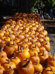 Joans Pumpkin Patch by About Us John And Joan U0027s Road Stand