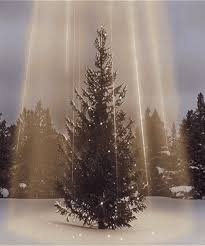 Sugar Or Aspirin For Christmas Tree by 10 Commandments For Finding U2013 And Keeping U2013 The Perfect Christmas Tree