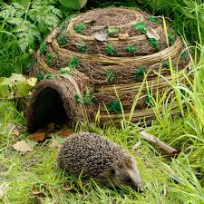 Weathervanes For Sheds Uk by Photos Of Hedgehogs Google Search Hedgehogs Leaves Forests
