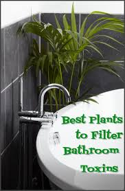 Good Plants For Bathroom by Astonishing Best Plants For Bathroom 86 In Small Home Remodel
