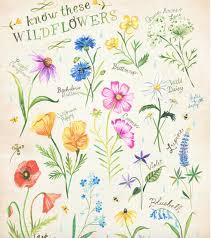 The World Of Illustration Botanical Illustrations By Katie Daisy