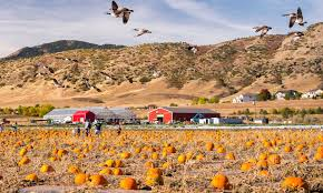 Pumpkin Patch Littleton Co by 50 Cheap Autumn Dates For You And Your Sweetheart 303 Magazine