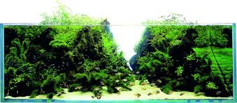 Let´s Start With Q: Layout Conception - Aquascaping Wiki Aquascaping Lab How To Mtain Trimming Clean And Change Aquascape Pinterest Red Rock Journal By James Findley The Green Machine Pennywort Brazilian Aquatic Plant Google Search Aquascaping Giuseppe Nisi Giuseppe_nisi_aquascaping Instagram Aquarium Sand Layouts Nature For Simons Blog Layout Ideas Tag Layout Aquascape Marcel Dykierek Aqua Rebell Shaping I Undaterworlds 85 Ian Holdich Tropica Plants