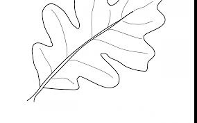 Edge Simple Leaf Template Outline Coloring Page Hollyemplate Pages Printable Best Adult