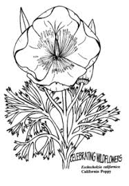 California Poppy A Page From Wildflower Coloring Book