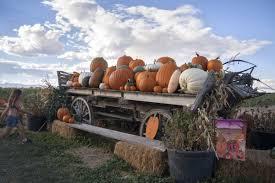 Free Pumpkin Patch Fort Collins by Bartels Farm Cache La Poudre River National Heritage Area