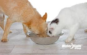water for cats water or soft water for your pets water right
