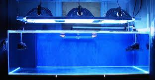 démarrer en récifal èse d un aquarium vivant articles