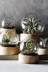 planetarium terrarium wohnzimmer pflanzen zimmerpflanzen