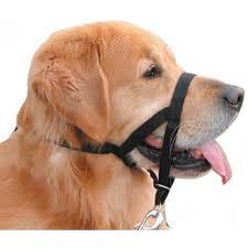 Dog Socks For Hardwood Floors Petco by Black Pet Supplies Pet Treats Toys Clothes U0026 More Discount