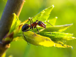 7 Most Safe Home Reme s For Getting Rid Ants