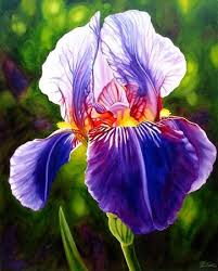 The Blue Iris is the state flower of Tennessee As I was growing up