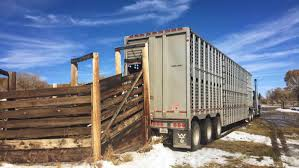 Hours Of Service With ELD Mandate Challenging For Livestock Haulers ... Trucking The Worlds Best Photos Of 389 And Livestock Flickr Hive Mind About Metzger Agricultural Exemptions Instated For Regulations Pork Firms Worried Electronic Logging Device Could Hurt Henderson Jobs Otr Long Haul Truck Drivers West Land Cattle Hauler Jessica Lorees 2003 Pete 379 Livestockcattle Haulers Sale Llc Kenworth T800 With 4 Axle Tra Truck Spill Cleaned Up A Lot Help Krvn Radio Australian Livestock Rural Transporters Association