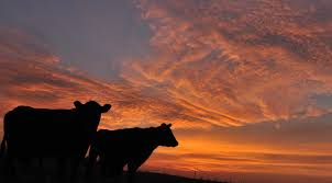 I Sat With The Angus Cattle Last Night, To See How They Enjoy The ... Hale Barns At Christmas Halebarnsevents Twitter John Banks Civil War Blog September 2015 Cheshire Lets Tstanperrin19 Wschd Soca Mga Wrzosowisko Drzewa Tecrniapl Sunrise Sunset Manchester Based Landscape And Travel Hay Bales And Barn Stock Photos Images Lead Generation Company Snaps Up Office Suite Messenger 11 Best Loto Images On Pinterest Lotus Flowers Buddha Flowers 1980s Pop Star Jona Lewie To Perform Hits Cluding Stop The