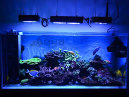 eclairage led pour aquarium eau de mer floraled n 1 les horticole leds plantes aquariums murs végétaux