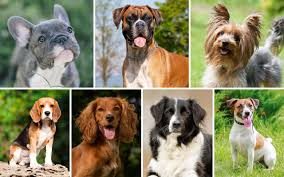 Best House Dogs That Dont Shed by How To Choose The Right Dog Breed For Your Family