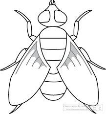 Animals Clipart fly insects black white outline 972 Classroom