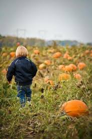 Tims Pumpkin Patch by Tuttle Orchards Greenfield In Top Tips Before You Go With