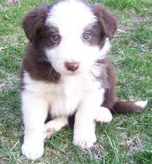 small dogs that don t shed want a pint sized pup that also leaves