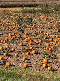 Pumpkin Patch Dixon Il by Burtons Pumpkin Patch Home Facebook
