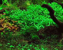 55 best planted tank images on aquascaping aquariums