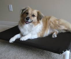 Unchewable Dog Bed by Build A Dog Cot For Around 10 15 Steps