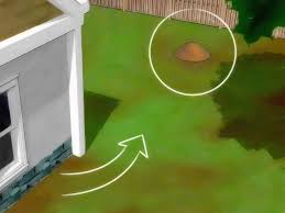 Flying Ants In Bathroom Sink by Simple Ways To Stop Ants From Coming Into Your Home Wikihow