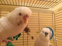 riser animal hospital niles animal hospital bird center 13 photos 45