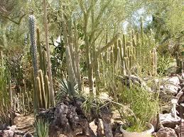 The Moorten Botanical Gardens