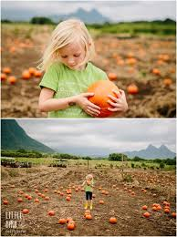 Waimanalo Pumpkin Patch Oahu by Pumpkin Patch Hawaiian Style Oahu Pumpkin Patch
