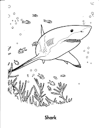 For Kid Tiger Shark Coloring Pages