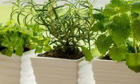 plantes vertes d interieur plantes vertes d intérieur entretien et arrosage des plantes d