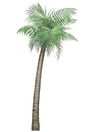 Wall Mural Decals Tree by Tropical Palm Tree Mural Wallsofthewild Com