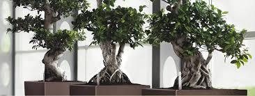 plantes pour bureau fruits au bureau et plantes dépolluantes pour le bureau green concept