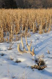 Elk Shed Hunting Utah by 50 Best Shed Hunting Hunting Pics Images On Pinterest Sheds