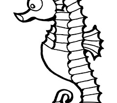 Seahorse Coloring Pages Free Online