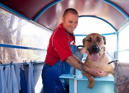 Aussie Pooch Mobile Dog Wash & Grooming Franchise Ph 1300 369 369 Wildlife Archives Saving More Pets Aussie Pooch Mobile Dog Wash Grooming Franchise Ph 1300 369 Pet City Mt Gravatt Adoptions Shop Warehouse Buy Supplies Online Petbarn Rspca Accsories Kmart Food Care Home Big W Adopt An Animal Find The Perfect Pet Today Rspca Nsw Best Friends Supercentre