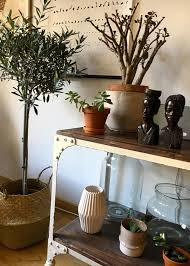 urbanjungle wohnzimmer sukkulenten olivenbaum g