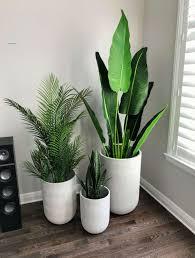 cornerspace wohnzimmer pflanzen pflanzen wohnung pflanzen