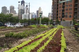Why I Oppose Urban Farming