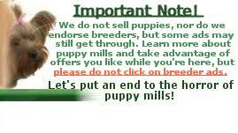 Small Non Shedding Dogs For Adoption by Non Shedding Dogs