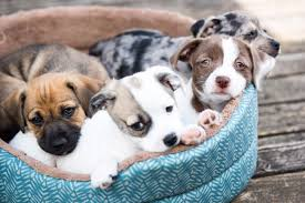 Pampered Pets Bed And Biscuit by How To Start A Pet Business