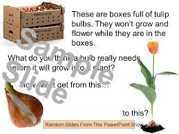 flowers and bulbs bulb planting where do bulbs come