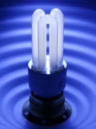 government ends free energy saving light bulbs scheme telegraph
