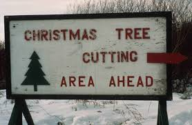 Best Real Christmas Tree Type Canada by Forestry Branch Sustainable Development Province Of Manitoba
