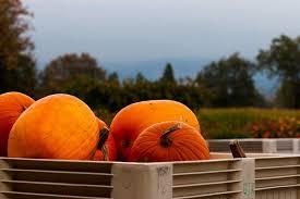 Canby Pumpkin Patch Train by Pheasant Fields Farm Home