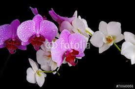 fototapete orchidee nach maß